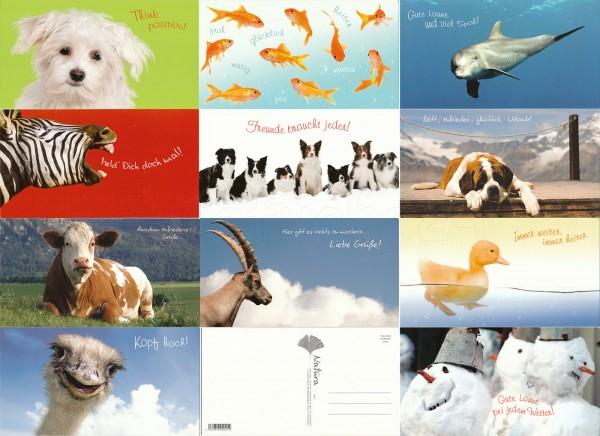 Grußkarten Postkarten 11 Motive Top Ware Sort.8 (66 Stück)