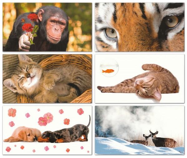 Grußkarten Postkarten 6 Motive Top Ware Sort.4 (36 Stück)