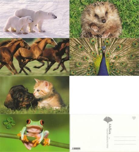 Grußkarten Postkarten Karten 6 Motive Top Ware Sort. 6 Tier Tiere Natur Pferd (36 Stück)
