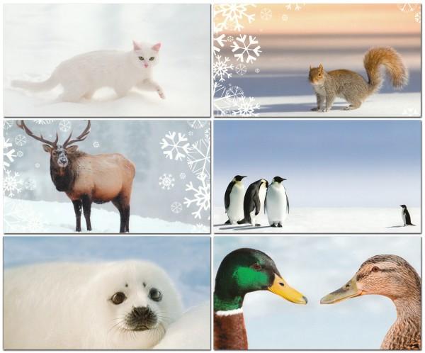 Grußkarten Postkarten 6 Motive Top Ware Sort.5 (36 Stück)